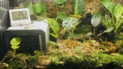 Kweek van zeldzame tropische planten